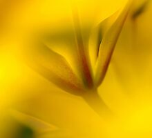 Yellow by Al Williscroft