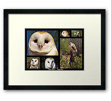 Barn Owl ~ Raptor Series Framed Print
