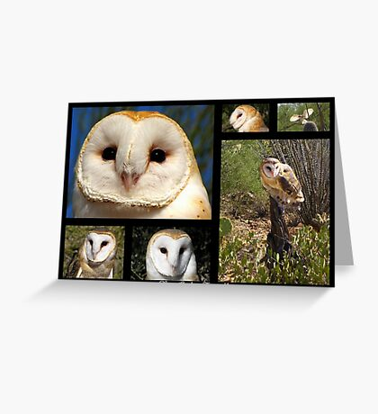 Barn Owl ~ Raptor Series Greeting Card