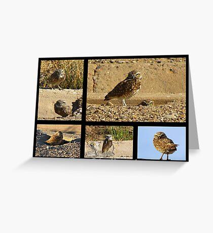 Burrowing Owl ~ Raptor Series Greeting Card