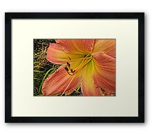 Who's the Fairest of Them All Framed Print