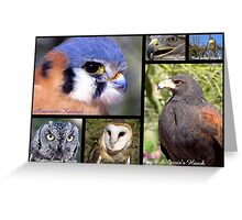 Birds Of Prey Poster Greeting Card
