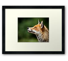 What Do Foxes Dream Of? Framed Print