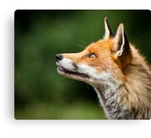 What Do Foxes Dream Of? Canvas Print