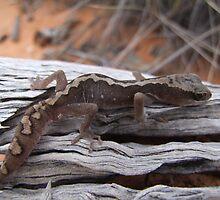 Eastern Stone Gecko by EnviroKey