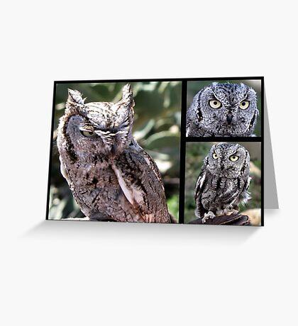Western Screech Owl ~ Raptor Series Greeting Card