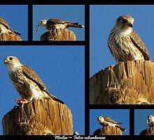 Merlin ~ Raptor Series by Kimberly Chadwick