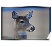 Doe in Cades Cove Poster