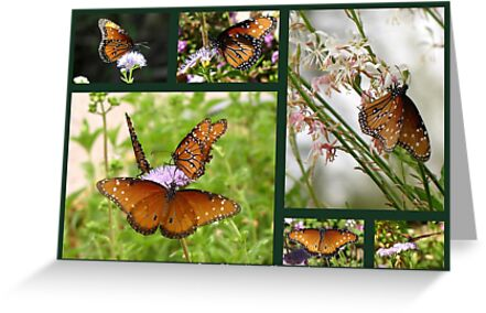 Queen Butterflies by Kimberly Chadwick