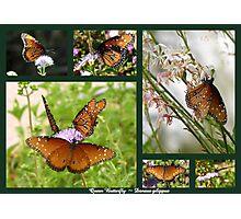 Queen Butterflies Photographic Print