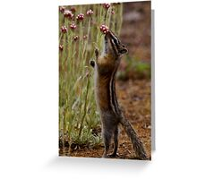 Little Darling of the Rocky Mountains #2 Greeting Card