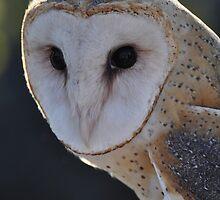 Barn Owl by Lorie Warren