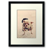 Please Meet Zoe Framed Print