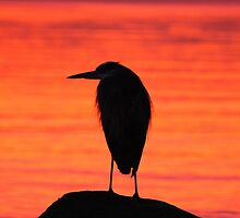 Great Blue Heron at Sunset by THurdCreations