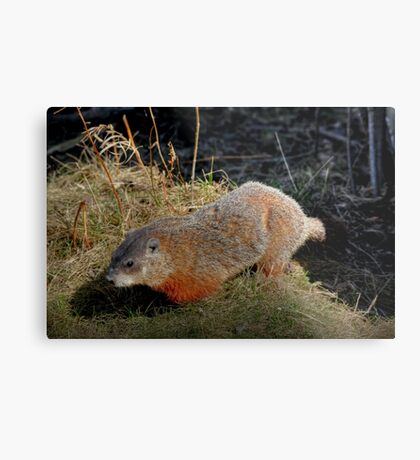 Groundhog Metal Print