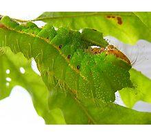 Soooooo green Photographic Print