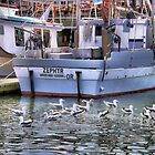 Gulls In the Water by jeanniechris