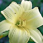 Thinking of You...Yellow Lily by shellyb