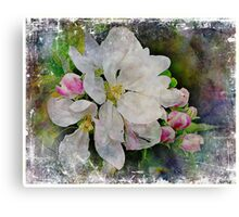 Apple Blossom Flower Canvas Print