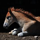 Foal in the Light by Donna Ridgway