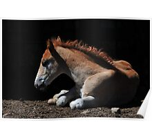 Foal in the Light Poster