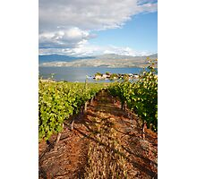 A view from the vineyard Photographic Print