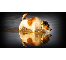 MIRROR MIRROR ON THE WALL, WHO IS THE FAIREST OF US ALL? Photographic Print