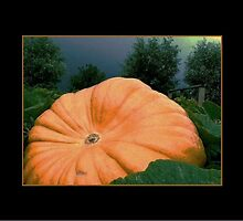 pumpkin how big! by LisaBeth
