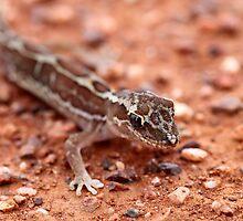 Box-patterned Gecko by EnviroKey