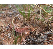 Beaded Gecko Photographic Print