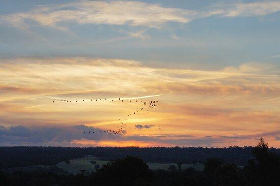 Bird Flying V Sunset by Sharon Robertson