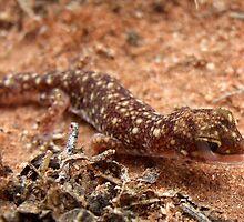 Beaked Gecko by EnviroKey
