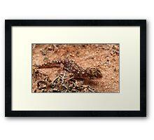 Beaked Gecko Framed Print