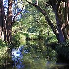 Creek Peace, Krambach, NSW, Australia. by Margaret Stockdale