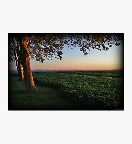 Golden Hour Valley View Photographic Print