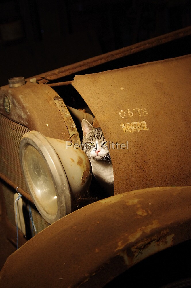 Mechanic Cat by Penny Kittel