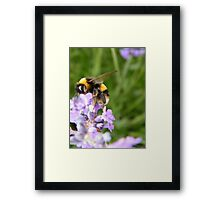 The Busy Bumble Bee Framed Print