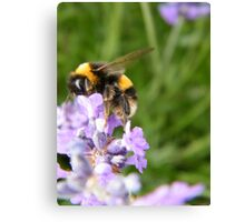 The Busy Bumble Bee Canvas Print