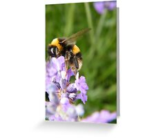 The Busy Bumble Bee Greeting Card