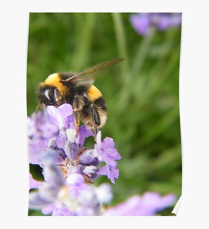 The Busy Bumble Bee Poster