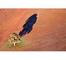 Lone Tree Photographic Print