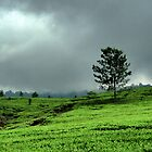 High Tea — Lembang Tea Plantation by AainaA