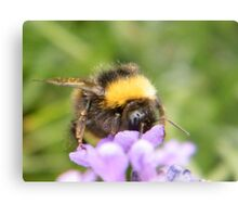 The Busy Bumble Bee (Cropped) Metal Print