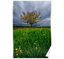 Blooming tree under strom clouds Germany Poster