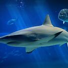 Reef Shark by DJ Florek