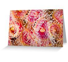 Jewel Anemonies Greeting Card