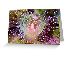 Cathedral Jewel Greeting Card