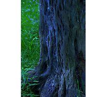 elf trees Photographic Print