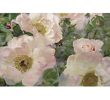Roses, Roses, Roses. Photographic Print