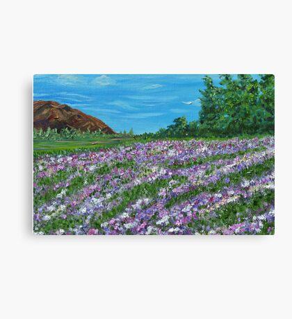 Lavender flowers, field art, floral art, oil painting Canvas Print